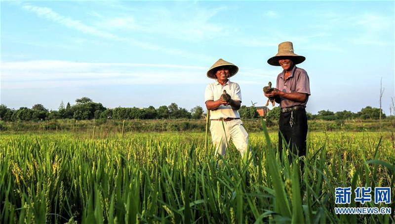 全国农产品商务信息公共服务平台