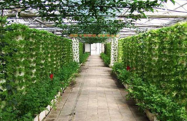 区域生态农业体系建设研究课题启动