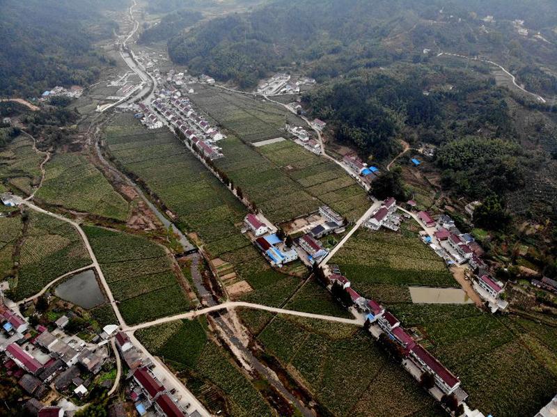 安徽岳西:高山茭白富农家