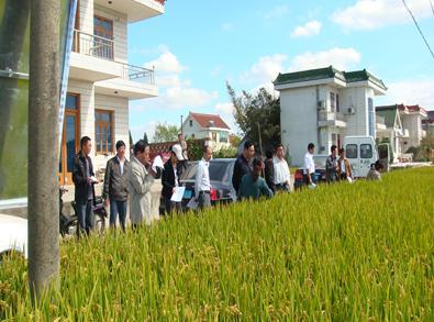 江苏如东县种子站公布今年主体水稻品种