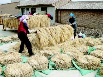 甘肃省定西市陇西县:中药材已成为富民强县的