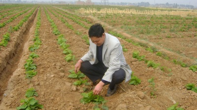 农作物嫁接技术图解