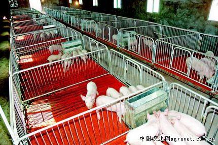 陕西百万头附图大县发展互动果畜良性实现建设龙虾脑生猪图片