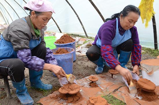 在吴方超的灵芝种植基地