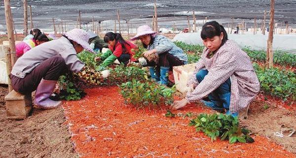 村产业结构调整