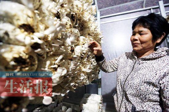 """女子种植食用菌年产值75万元 设计""""阳台蘑菇"""""""
