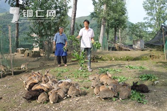 徐爱强:养殖野兔踏上致富路
