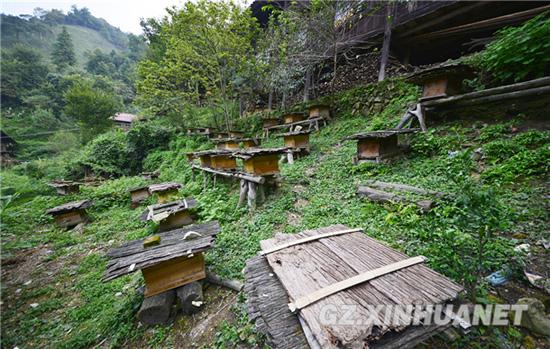 天柱马鞍农民深山养蜂酿造新生活