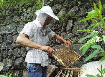 土蜂养殖产业化 飞到网上效率大