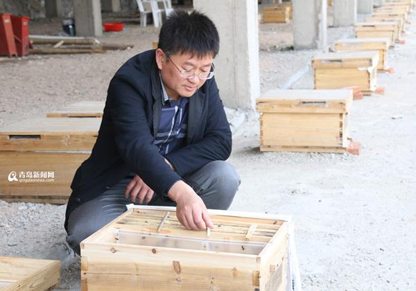 探访山东青岛深山养蜂基地 中华蜜蜂达数百万