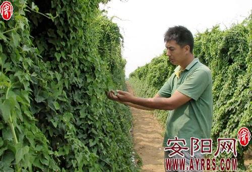 河南汤阴县宜沟镇促进农业产业结构优化升级
