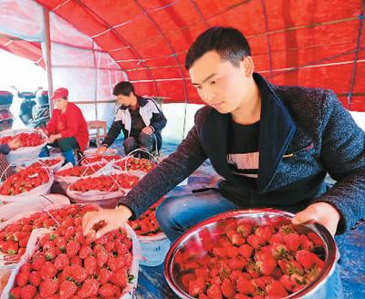 """""""草莓男孩""""创业开门红"""