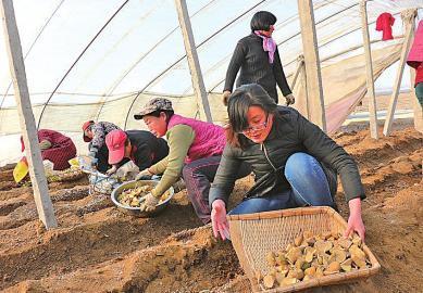 80后音乐系女大学生返乡种土豆