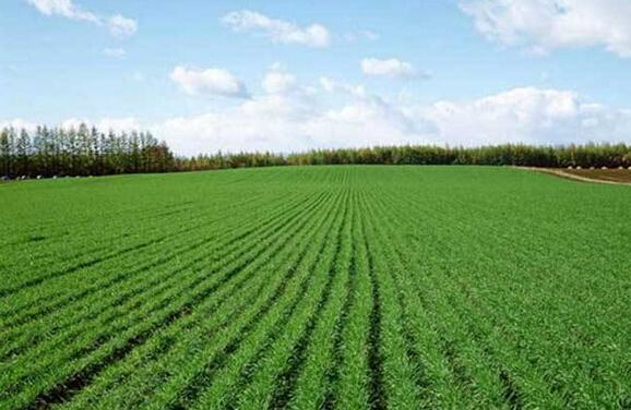 农业部:结构调整势头良好