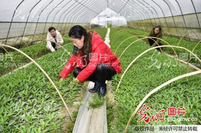 2017年贵州新农村建设计图