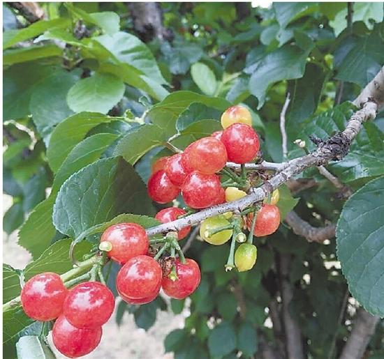 浙江杭州:天暖了,水果价格也升温了